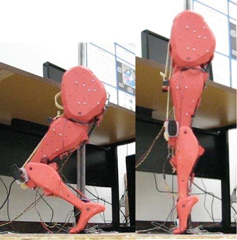 U of Arizona Researchers Build Bipedal Robot