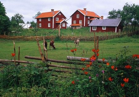 a farm - all the Småland houses and farms are noted for the red and white paint!- Småland, Sweden