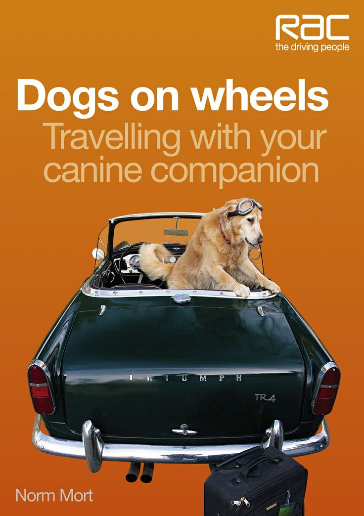 Dogs on wheels – Travelling with your canine companion
