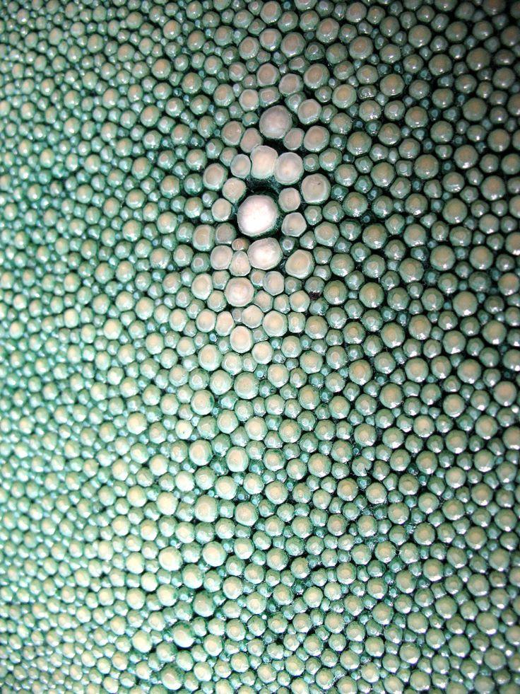 Shagreen (stingray leather), fishscales texture.