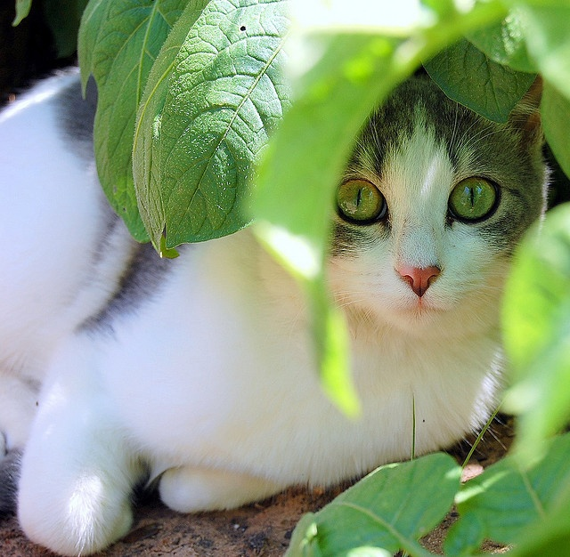 <3: Wild Cat, Gifts Cards, Sweet, Cute Cat, I Love Cat, Beautiful Pictures, Beautiful Eye, Green Eye, Animal Domestic