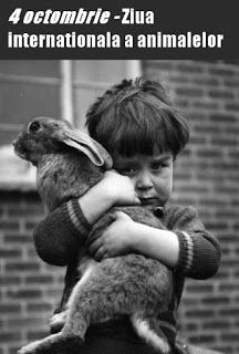 diane.ro: Citate despre animale | Ziua internaţională a anim...