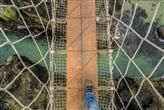 The rope bridge at Carrick-a-Rede in Northern Ireland is used to get from the mainland to the tiny island from which it gets its name. No-one has yet fallen off the bridge, which is 20m long and 30m in the air, but only eight people are allowed on it at once to keep it strong.