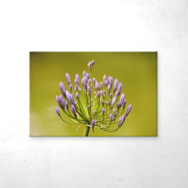 Floare2