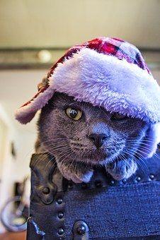 Cat, Hat, Feline, Pet, Kitty, Grey