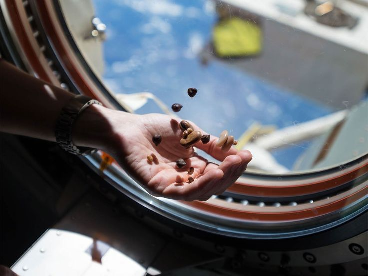 You know astronaut ice cream? That hard, crumbly freeze-dried mystery sweet in the guise of a Neapolitan? Astronauts don't actually eat it. So what are our space explorers actually eating? It's surprisingly quite tasty.