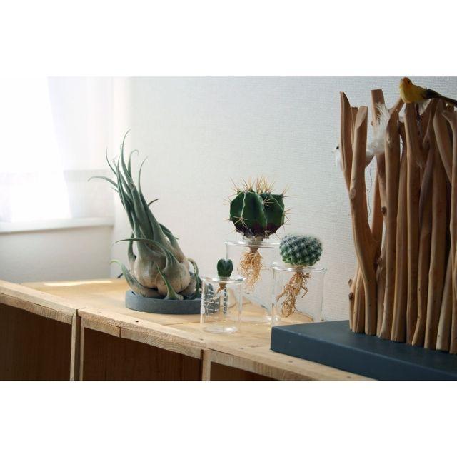 Atsushiさんの、botanical room,水耕栽培,サボテン,ビーカーテラリウム,林檎木箱,植物,NO GREEN NO LIFE,のお部屋写真