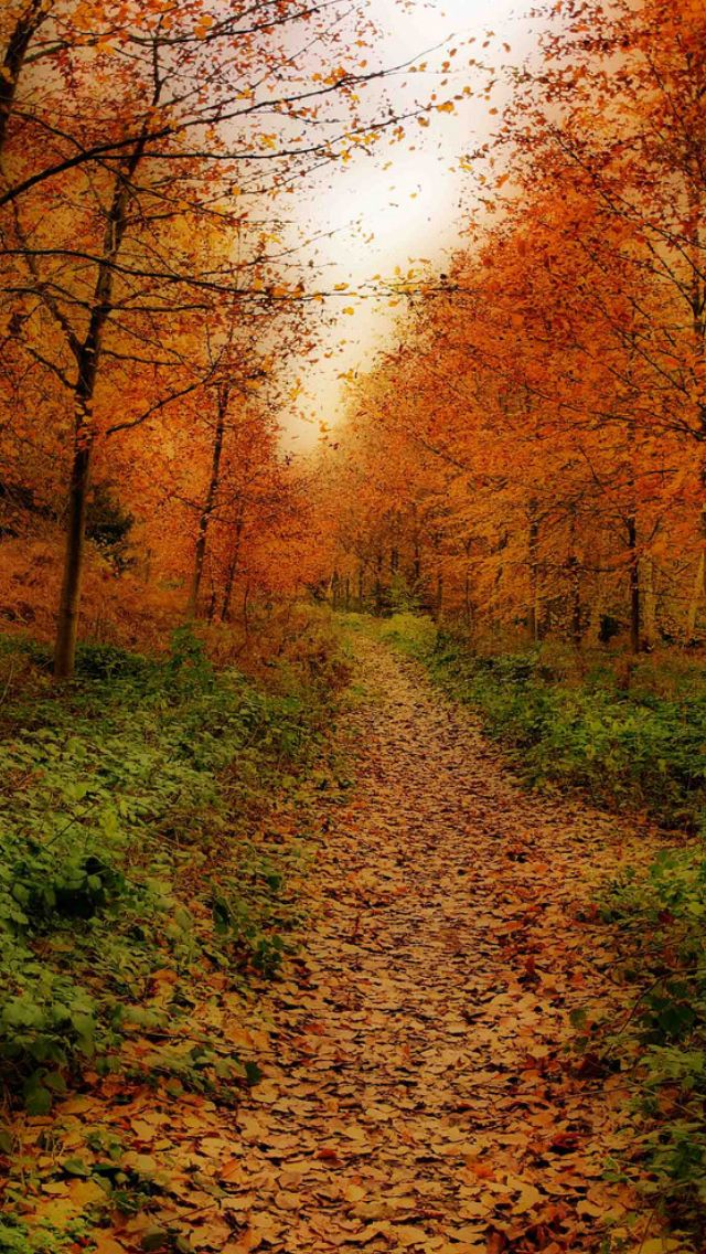 Autumn path through the trees source Flickr.com