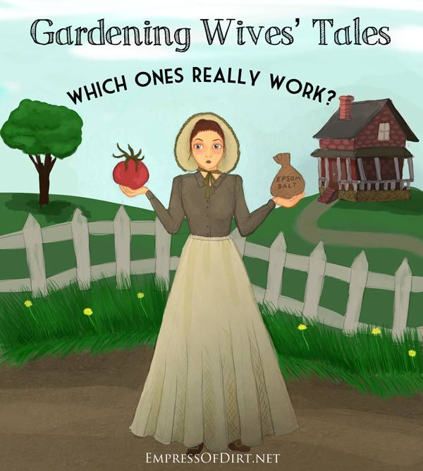 Good tips - Gardening Old Wives' Tales: Which Ones Really Work?  Epsom salts? Sugar? Baking soda? Egg shells? Copper pennies? Beer? Coffee grounds?