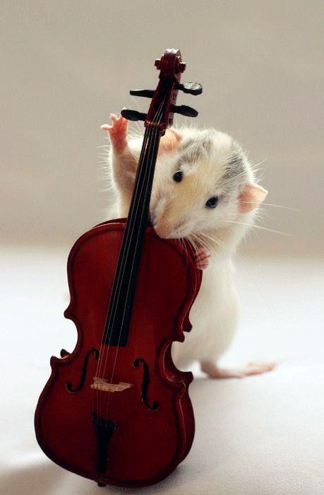 Não estou gostando do ton deste instrumento.