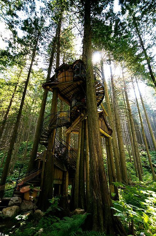 Tree House awesomeness.  Where do you find   tree house architects?