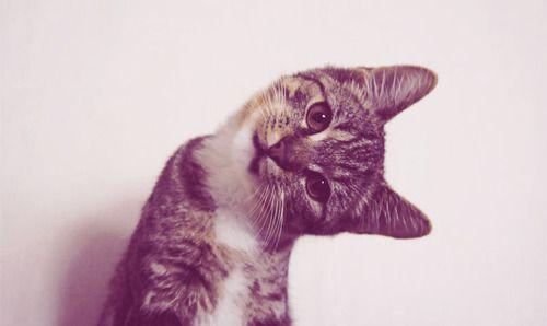 Why do I like cats?: Kitty Cat, Funny Cat, Points Of View, Cute Kitty, Baby Animal, Crazy Cat, Kittens, Hello Kitty, Kittycat