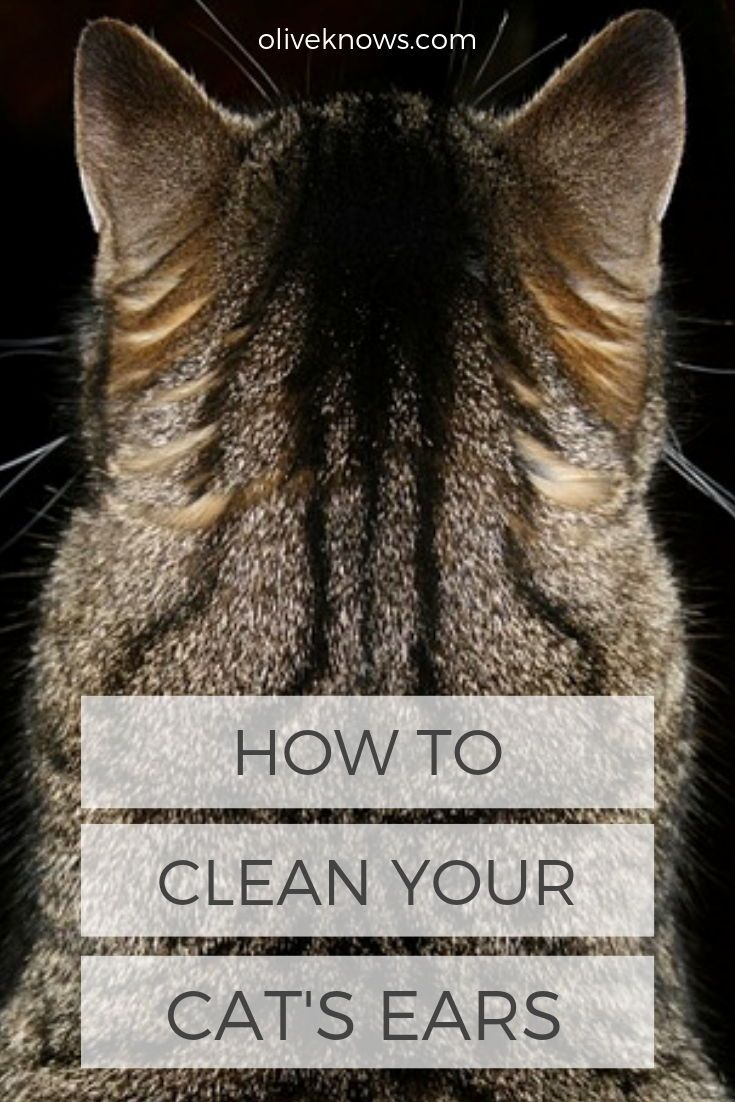 How To Clean Your Cat S Ears With Images Clean Cat Ears Cat Care Cat Ears