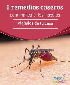6 remedios caseros para mantener los insectos alejados de tu casa   Para evitar el uso de químicos agresivos, hay una serie de remedios caseros para alejar los insectos del hogar. ¡Conócelos!
