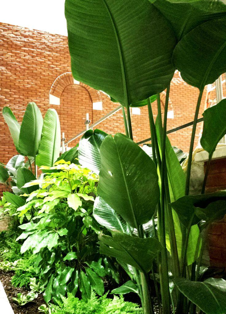 Aménagement de bacs intérieurs pour une aire de restaurents  Plantes tropicales diverses (Palmiers chinois, fougères de Boston, Oiseaux du paradis, etc.)  www.ligneverte.com