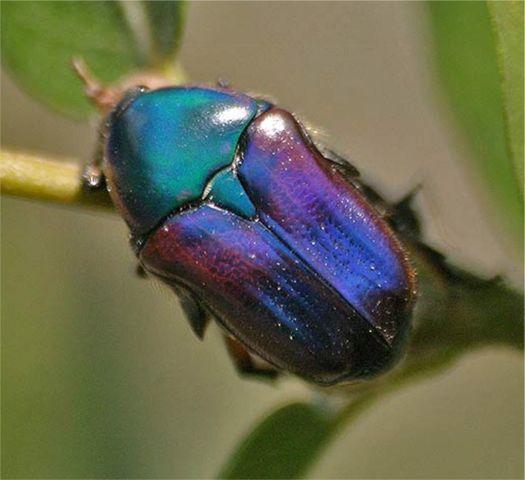 Domain Eukarya Kingdom Animalia Phylum Arthropoda Class
