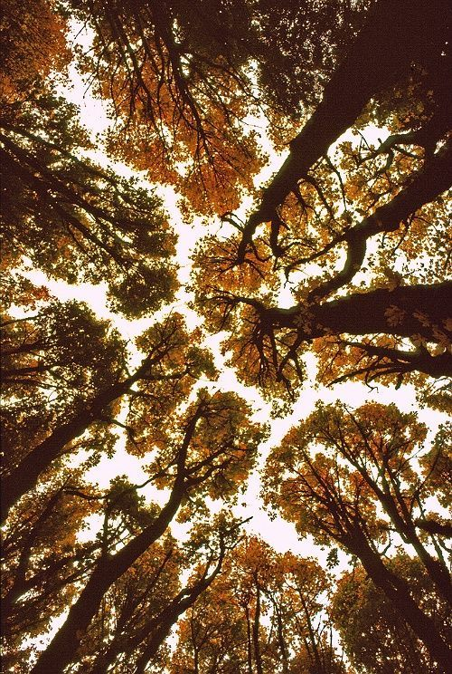 It was like a giant puzzle piece, the branches and leaves of the trees were reaching towards each other so. You could see the lines where they didn't touch, and you could turn those lines into the pieces. Then if you squinted ever so slightly, the pieces would form together, making a sky of fall.