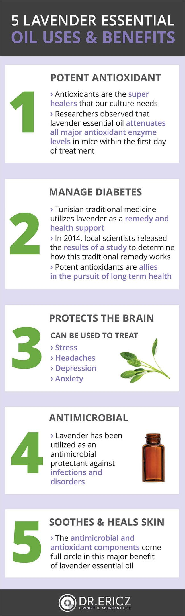 Lavender Essential Oil Uses Infographic