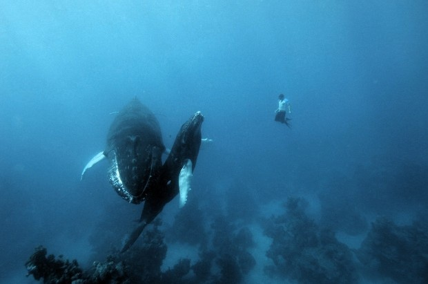 Whale watching the cool wayFree Diving, Whales Watches, Nature, Animal Photography, Scubas Diving, Humpback Whales, Christmas Boxes, The Buckets Lists, Freediving