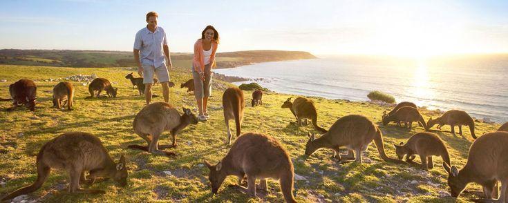Voyage Kangaroo Island : tour et circuits sur l'île des Kangourous au large d'Adelaide. Une faune en liberté : kangourous, pingouins, koalas, wallabies, phoques et baleines.