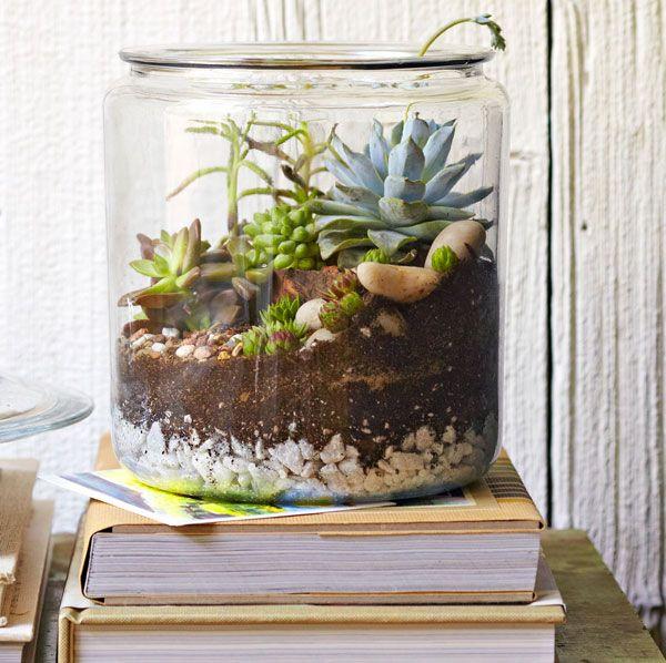 Cookie Jar Table Top Garden: Gardens Ideas, Creative Ideas, Minis Gardens, Tabletop Gardens, Succulent Gardens, Gardens Projects, Terrarium, Cookie Jars, Cookies Jars
