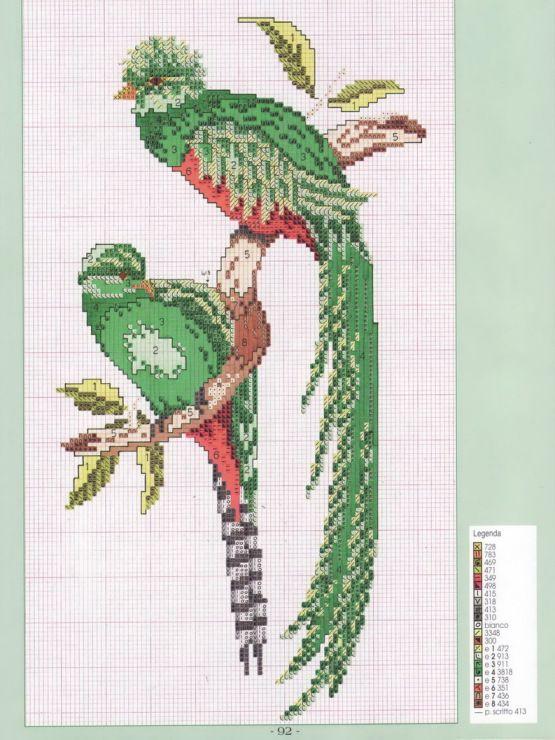 resplendent quetzal birds