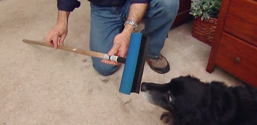 #7 – Gloves and Squeegee for hair removal Read more at http://iheartdogs.com/15-easy-money-saving-tips-for-dog-owners/#35eqwzmpR8v5p71s.99