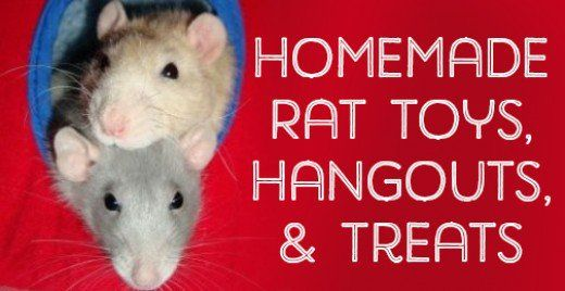 From hammocks and chew toys to ladders and houses, here is a list of DIY ideas for things you can make your rats.