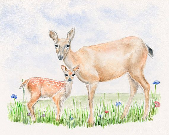Deer Original Watercolor Painting By Jamesriverstudios
