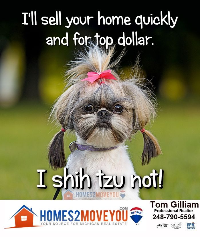 Awesome real estate humor? I could never shih-tzu | Animals