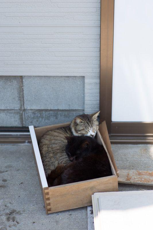 ツインベッド - 猫に逢いに行こう