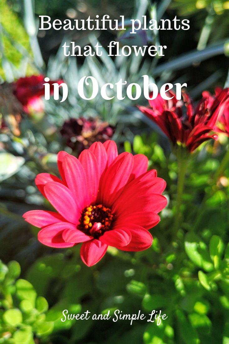 Garden plants for october-8116