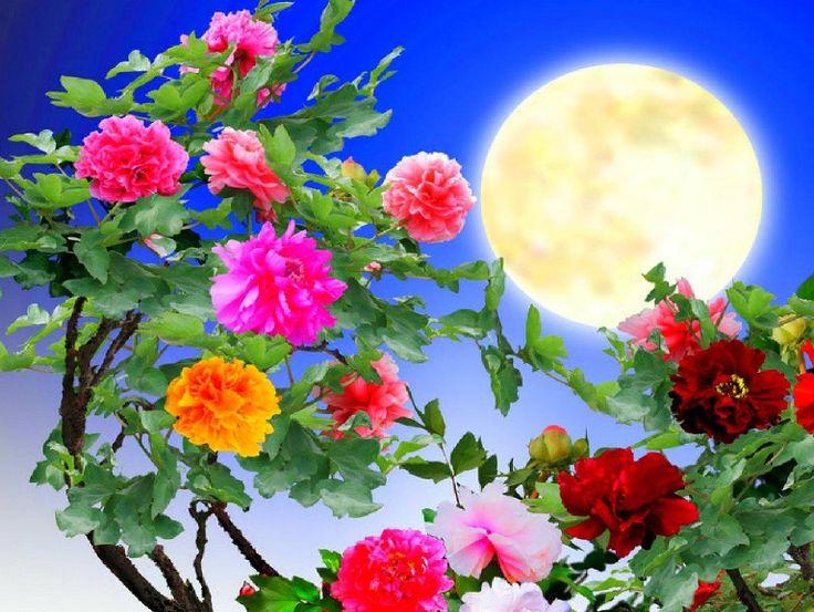 Beautiful Scenery Of Flowers Www Pixshark Com Images