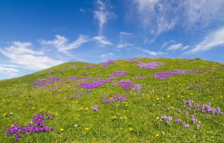 Prati verdi, fiori variopinti e cielo azzurro. #natura e #primavera in Valtellina