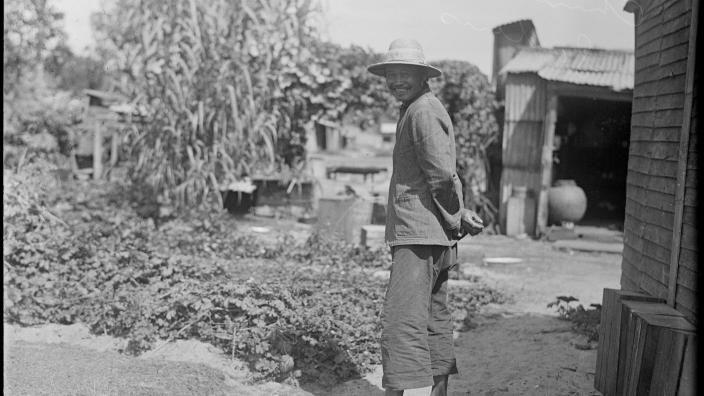 Chinese Market Gardener (name not supplied).