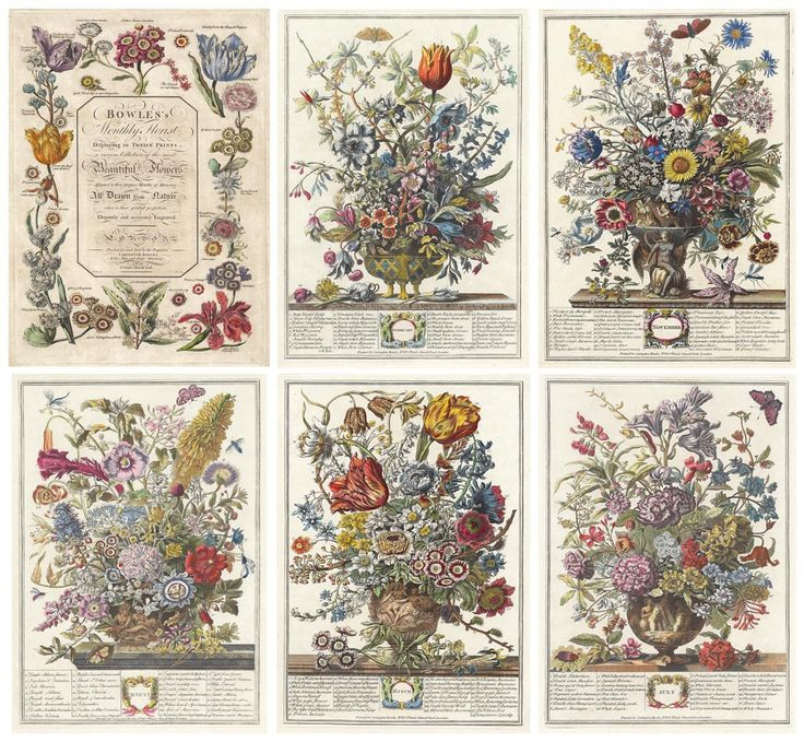 Botanical Flowers Of The Month Pictures Robert Furber