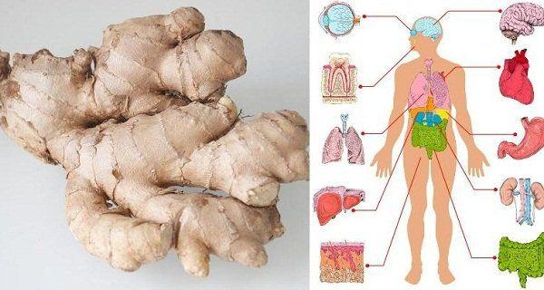 Découvrez les bienfaits insoupçonnés du gingembre et comment le consommer !