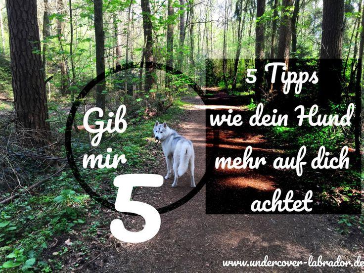 5 Tipps, wie Dein Hund mehr auf Dich achtet.