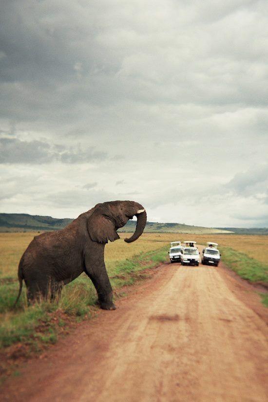 Traffic jam in Africa - Elephant crossing.