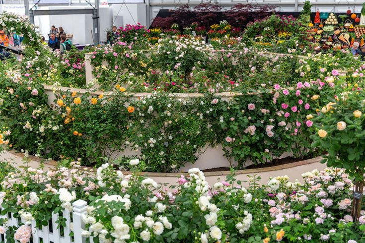A very special exhibit for RHS Chelsea Flower Show 2019
