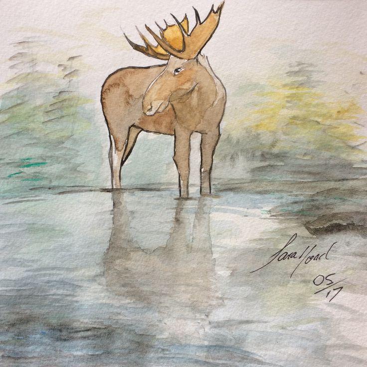 Moose. ~ Sara Noad
