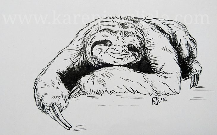 Day 23: prompt: Slow . In honour of International Sloth Day, this month. copyright 2016 Karen Carlisle.