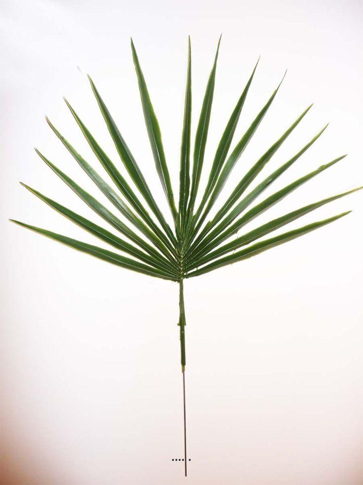 17 meilleures id es propos de palmier chamaerops sur for Feuille de palmier deco