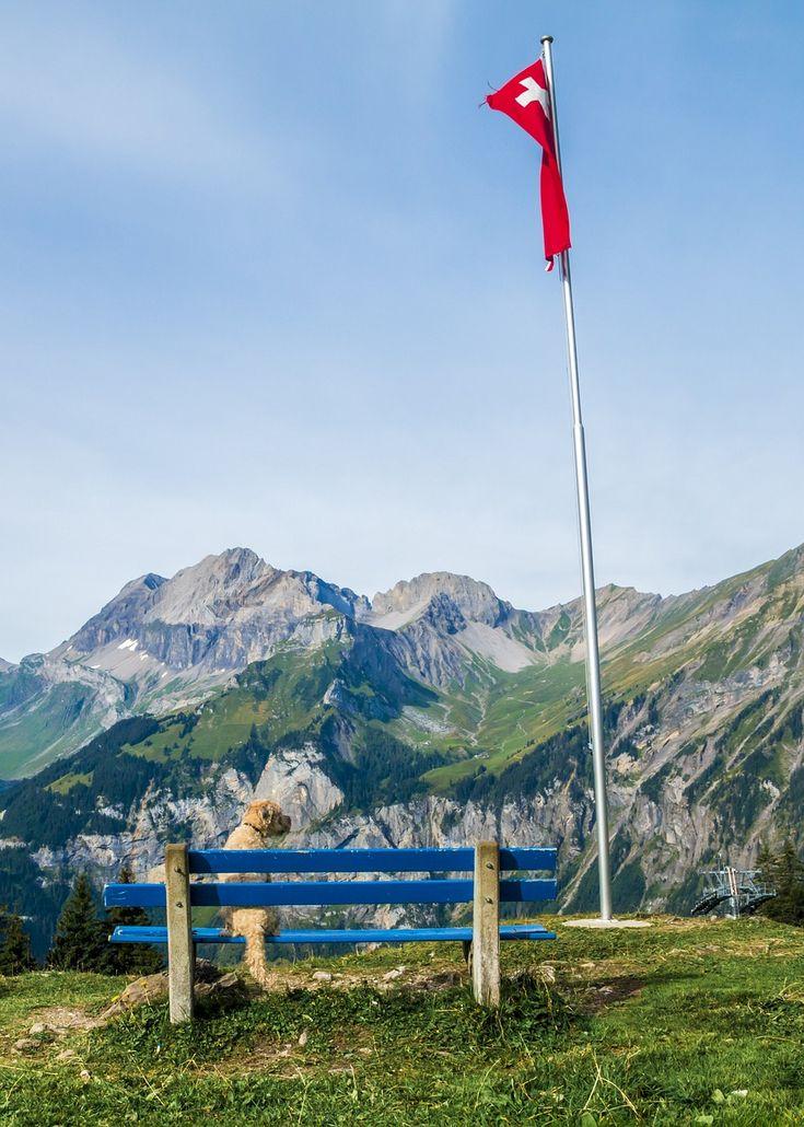 Urlaub mit Hund - Die Schweiz ist ein Paradies für 2- und 4-Beiner!  (c) pixabay