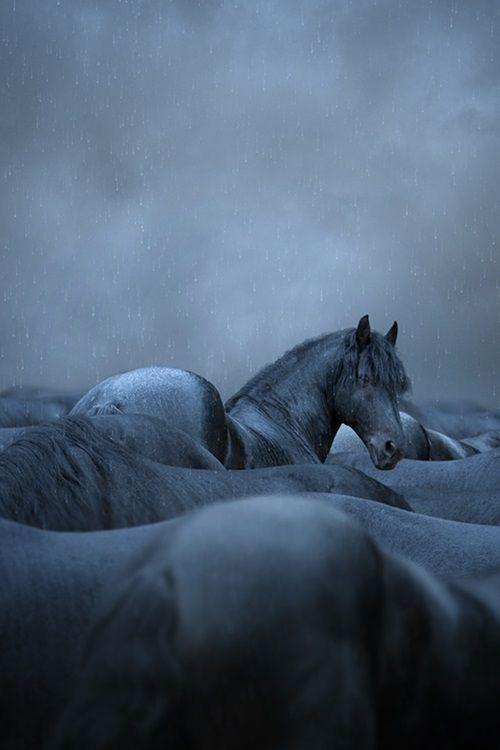 Black Horses in the rain (by Cara's Design)