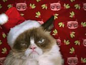 No one can bring on the bah humbug better than Internet's famed feline, Grumpy Cat. Her first movie debuts November 29 on Lifetime.