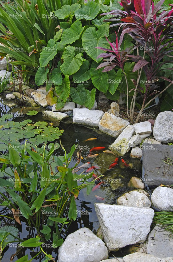 1231 best images about ponds and water features on pinterest for Koi pond overflow design