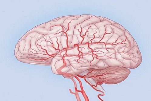"""Причинами сужения и плохой проходимости сосудов головного мозга могут быть не только атеросклеротические бляшки, но и спазм самого сосуда при артериосклерозе или образование тромба при <a class=""""mh-excerpt-more"""" href=""""https://101covet.com/archives/16214"""" title=""""Лекарственные растения для улучшения мозгового кровообращения"""">... ЧИТАТЬ</a>"""