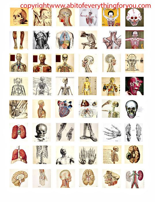 "human anatomy skulls skeletons body parts vintage clip art digital download collage sheet 1"" inch squares graphics images craft printables"