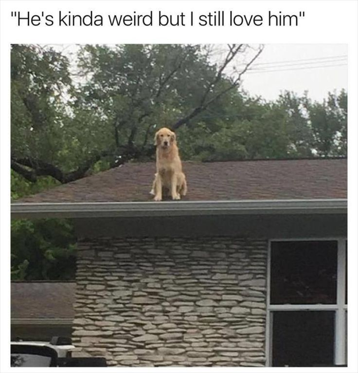 Best Cute Animals Images On Pinterest Dogs Funny Animals - 21 hilarious dog moments